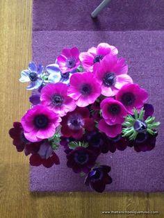 bold purple anemones XOXO