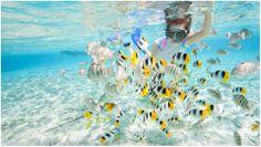 puerto rico fajardo snorkeling sailing