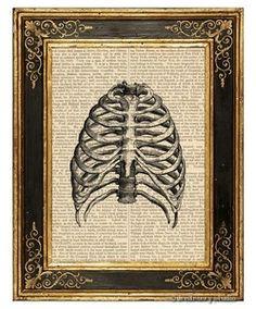 Human Rib Cage Art Print on Antique Book Page Vintage Medical Illustration | eBay
