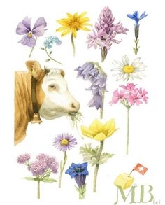 Just look at everything a Swiss cow eats! Art by Marjolein Bastin. Watercolor Flowers, Watercolor Art, Cow Drawing, Art Carte, Marjolein Bastin, Nature Sketch, Nature Artists, Nature Journal, Dutch Artists