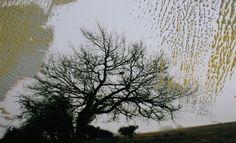 Overpainted Photograph N°013 - oil on photograph [20 x 30] / 2013 - [Eifel, Germany]