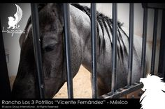 ♞ Rancho Los 3 Potrillos ♞. LEYVA GROUP INTERNATIONAL S.A.S www.leyvagroupint... © Leyva Group International S.A.S. - All Rights Reserved