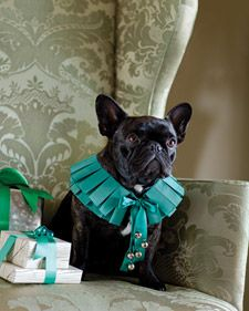 It's the time of year for everyone -- canines included -- to don finery. In this regal, easy-to-sew collar, worn by Martha's French bulldog Francesca, two rows of silk-taffeta ribbon are pressed into box pleats and stitched in place. Martha Stewart Pets, Dog Christmas Gifts, Christmas Outfits, Handmade Christmas, Christmas Time, Merry Christmas, Christmas Sewing Projects, Handmade Dog Collars, Dog Crafts