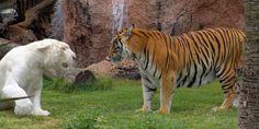 Relaciones Interespecíficas: Concepto, Tipos y Ejemplos Mantis Religiosa, Animals, Relationships, Concept, Animales, Animaux, Animal, Animais