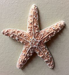 A personal favorite from my Etsy shop https://www.etsy.com/listing/224875773/starfish-wall-decoration-wedding-beach