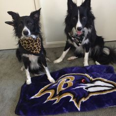 Sophie and Rowdy say go Ravens!!