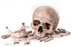 human bones - חיפוש ב-Google
