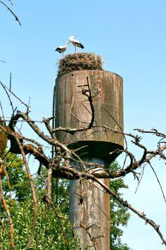 Litvánia • Tauragė County Storks, The Locals, Netherlands, Birds, Holidays, Outdoor Decor, Animals, Nests, Stork