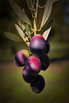 Fruit And Veg, Fresh Fruit, Fruits And Vegetables, Gardening Photography, Fruit Photography, Fruit Names, Fruit List, Fruits Photos, Fruit Picture
