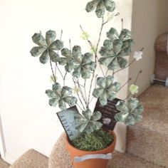 Money Tree, Graduation Gift - this is so cool!