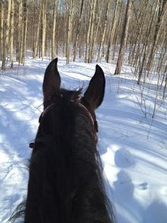 Woo Hoo ... today March 7, 2014 just Iggy and I went out for a nice long hack in the Vivian Forest! It's been a long Winter!!!