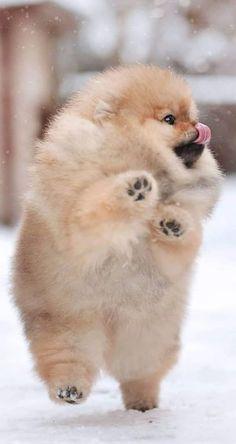 Super Cute Puppies, Cute Baby Dogs, Super Cute Animals, Cute Dogs And Puppies, Cute Little Animals, Cute Funny Animals, Puppies Puppies, Teacup Puppies, Fluffy Puppies