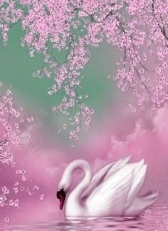 Swan in pink Beautiful Swan, Beautiful Birds, Pretty Pictures, Art Pictures, Photos, Swan Pictures, Swan Painting, Glitter Graphics, Animation Background
