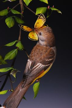 Butterfly Catchers - Josh Guge