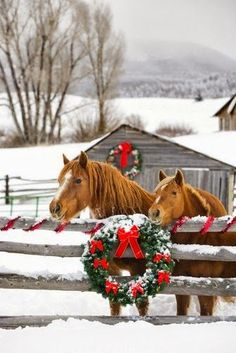 A country Christmas - horses, wreath, and snow Christmas Horses, Noel Christmas, Christmas Animals, All Things Christmas, Christmas Cards, Christmas Mood, Christmas Wreaths, Christmas Morning, Rustic Christmas
