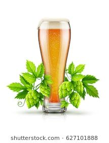 Glass of light lager Beer with white foam and hop plants buds, green leaves. Malt organic natural ingredient for production of crafting beer in breweries. Eps10 isolated vector illustration.