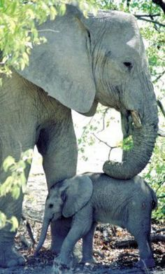 Elephants at Pilanesberg Game Reserve South Africa. The Animals, Cute Baby Animals, Wild Animals, Elephants Never Forget, Save The Elephants, Group Of Elephants, Beautiful Creatures, Animals Beautiful, Elephas Maximus