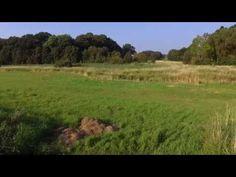 Drone ( camera test Phantom 3) - YouTube