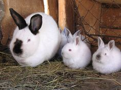 An Introduction to Raising Rabbits