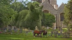 The Topiary Cat's Official Slideshow