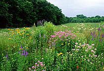 Discover The Beauty And Practicality Of Landscaping With Native Minnesota Plants