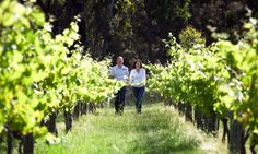 Stanthorpe is located south west of Brisbane and is nestled in the heart of the Granite Belt. Known as Queensland's premier wine region, it boasts more than 45 wineries, vineyards and cellar doors.