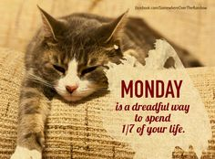 Every start of the week it`s the same... Monday is a dreadful way to spend 1/7 of your life.