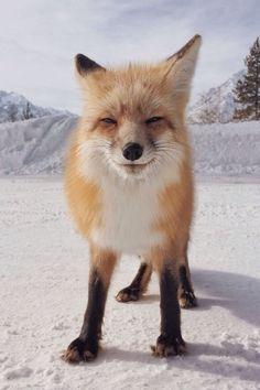 Um dos olhares mais fofos do reino animal!