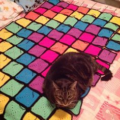 Checking that I'm joining the squares in the right positions... Chief blanket inspector approves! #crochet #crochetblanket #foster #inspector #crochetaddict #hooked #square #midnightbrite #itshiptobesquare by fromagecat