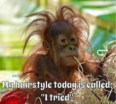 """My hairstyle today is called: """"I tried"""" funny jokes funny quotes humor funny pics fun quotes funny images fun pics jokes and fun Funny Animal Memes, Animal Quotes, Funny Animal Pictures, Funny Animals, Cute Animals, Funny Images, Funny Pics, Good Morning Funny Pictures, Animal Humor"""