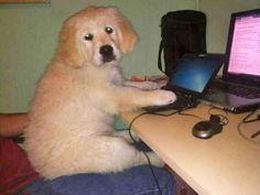 El mejor Community Manager de la Historia!! Conoce sus andanzas pinchando en la imagen Community Manager, Dog Pictures, Smile, Humor, Dogs, Animals, Get Well Soon, Historia, Animales