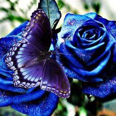 Beautiful Blue Flowers...with purple butterfly. :)