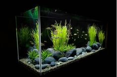 72 best planted aquarium images planted aquarium aquariums aquarium rh pinterest com