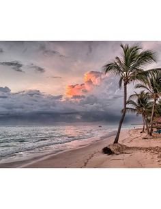 Shop Ocean Waves Sandy Beach Sunset Poster created by Sneffygirl. Palm Trees Beach, Hawaii Honeymoon, Sunny Beach, Beach Print, Congratulations Card, Island Beach, Ocean Waves, Beach Photos, Caribbean