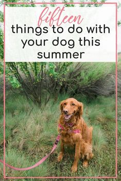 15 Things to Do with your Dog this Summer - Hey There, Chelsie Dog Care Tips, Pet Care, Dog Bucket List, Pet Dogs, Dogs And Puppies, Puppies Tips, Dog Games, Dog Safety, Summer Dog
