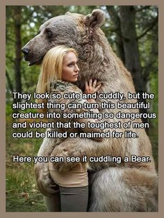 They Look So Cute and Cuddly but the Slightest Thing Can Turn This Beautiful Creature Into Something So Dangerous and Violent That the Toughest of Men Could Be Killed or Maimed for Life Here You Can See It Cuddling a Bear Bears Are Deep Bro Funny Adult Memes, Funny Jokes For Adults, Stupid Funny Memes, Haha Funny, Funny Stuff, Funny Shit, Hilarious, Adult Humor, Funny Things