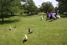 Just a quick reminder - Stuhr posts updates to our Summer School classes every day. Go to www.stuhrmuseum.org to find an adventure for the young person in your life (like chasing ducks in a fairly outfit).
