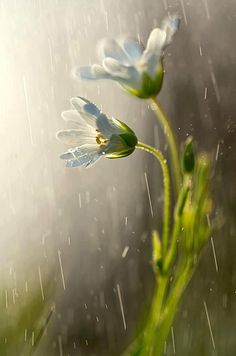 Laat Ruben en Julian in je hart bloeien als deze twee bloemen en denk met liefde aan ze terug!
