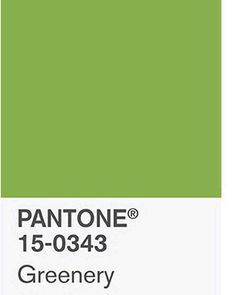 Pantone's 2017 Colour of the Year Greenery. Too yellowy for me, I prefer the deeps! Fall Wedding Flowers, Fall Wedding Decorations, Fall Wedding Colors, Pantone 2017 Colour, Sign Fonts, Color Of The Year 2017, Wild Atlantic Way, Fall Wedding Hairstyles, Barn Signs