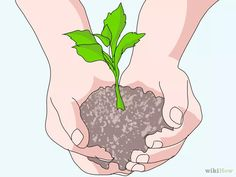 Imagen titulada Plant Cherry Seeds Step 1