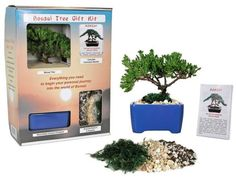 Here's a quirky gift idea: a bonsai kit! #christmas2014