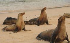 seals doing yoga!