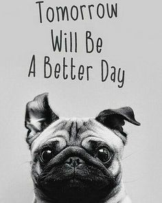 pug- tomorrow will be a better day.not my pic found it looking up pug pics… Pug Wallpaper, Iphone 5s Wallpaper, Iphone Wallpapers, Iphone Pics, Amazing Animals, Cute Animals, Emoticons, Better Day, Tomorrow Will Be Better