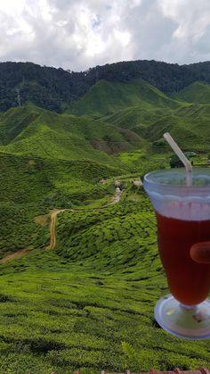 Campos de chá da Malásia, Cameron Highlands | Viaje Comigo Cameron Highlands, Kuala Lumpur, Nature, Travel, Fields, Traveling, Naturaleza, Viajes, Destinations