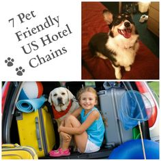 7 Pet Friendly US Hotel Chains