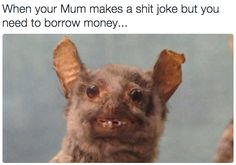 On polite laughter: | 18 Times Crap Taxidermy Nailed What It's Like To Be Awkward