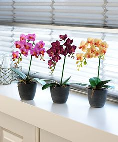Phalaenopsis orchid modern vase