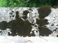 Beautiful moss thriving on an aged concrete bridge