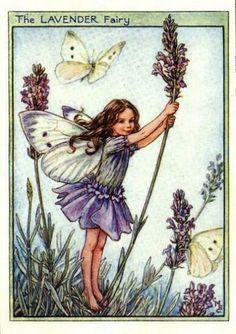 ラベンダー花の妖精