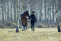 Online shop for Horse Tack, Riding Apparel, Horse Supplies and Equestrian  Clothing. 3b49208cd5bc